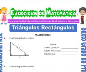 Ejercicios de Triángulos Rectángulos para Sexto grado de Primaria